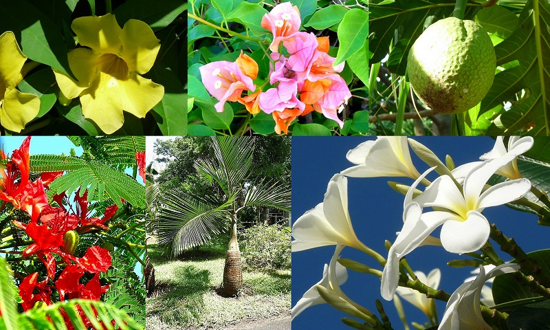 Mauritius Flora und Fauna