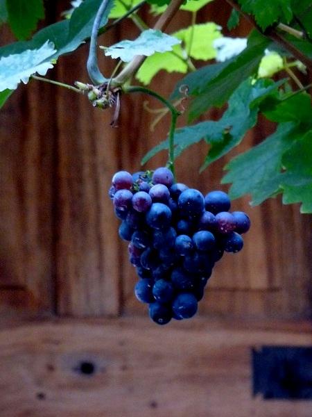 Mosel- Wein- Winnigen