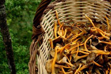 Pilze Suchen im Herbst