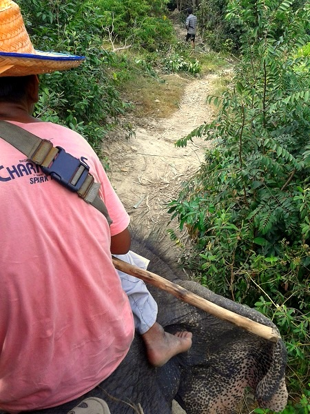 Koh Phangan Thailand Elefanten Trekking