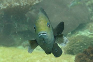 Tauchen in Thailand- Scuba Diving