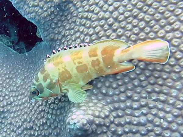 Tauchen in Thailand- Scuba Diving Fisch