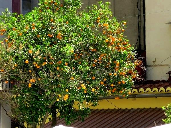 Valencia Apfelsinen Orangen