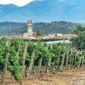 La Vinyeta Weinanbau Costa Brava