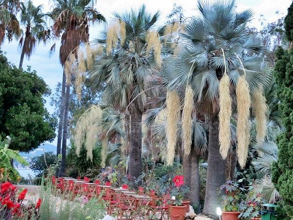 Botanischer Garten Marimurtra Costa Brava
