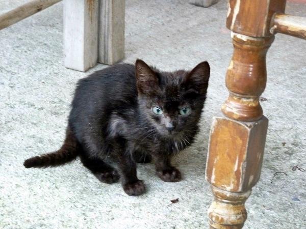 Ano Gazea - greek cat Katze