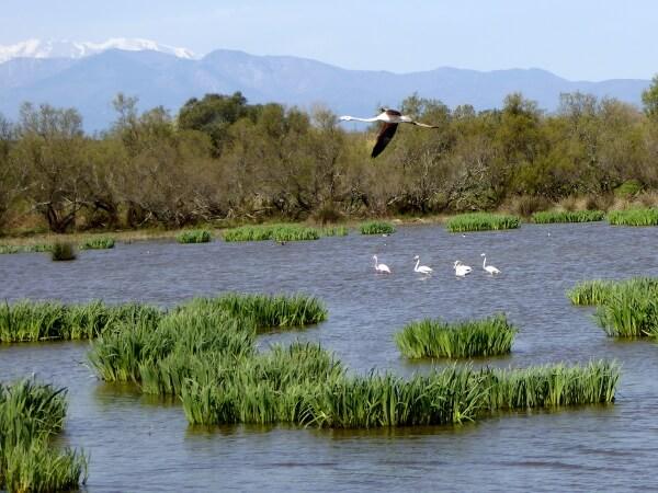 fliegender flamingo aiguamolls verschneite berge
