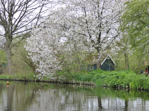 frühling in Holland blüte