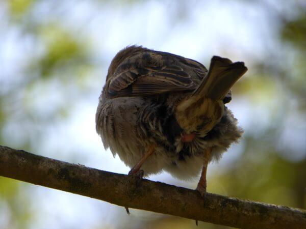 vogel von hinten aiguamolls