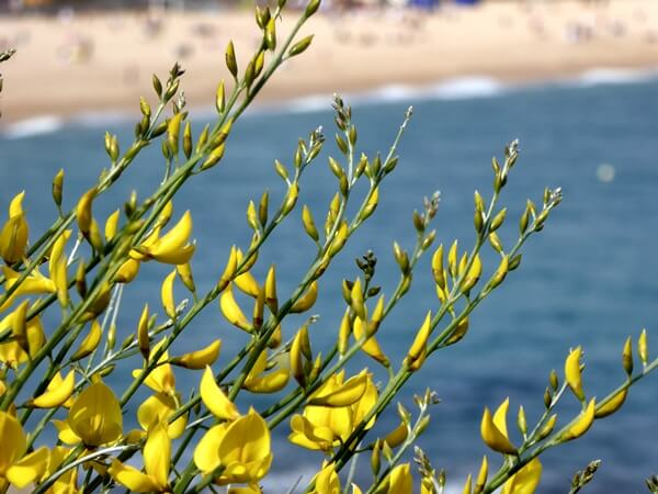 Frühling Costa Brava Lloret de Mar
