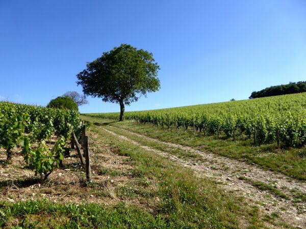 Sancerre Wein La faille der Graben