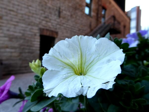 Tallinn Blume im Industrieviertel rotermann