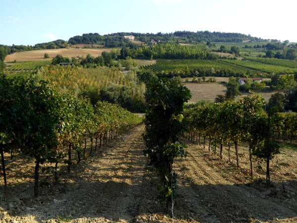 Weine der Emilia Romagna Weinreben Landschaft