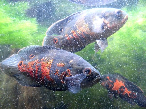 Aquarium Fische im Parque Lage