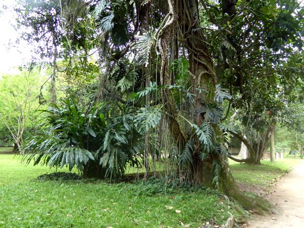 Jardim Botânico BAum
