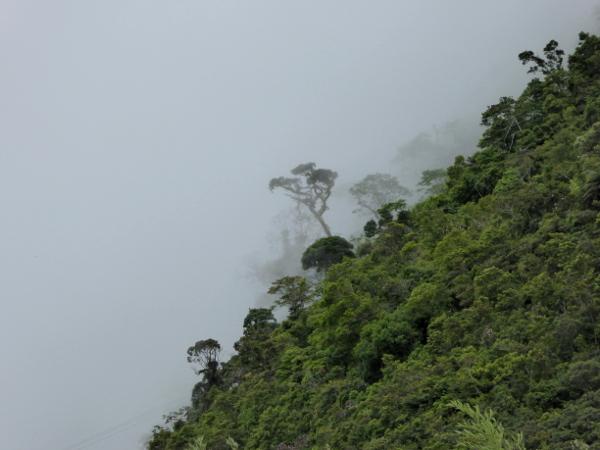 Parque Serra dos Orgaos Teresopolis im Nebel