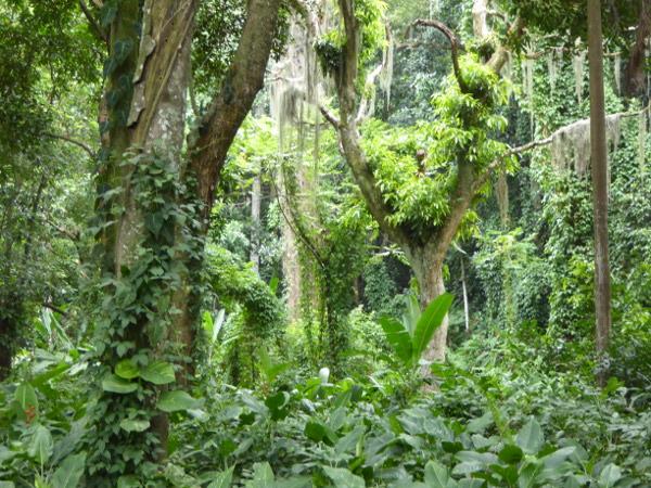 Parque Lage Gruen Pflanzen Rio de Janeiro