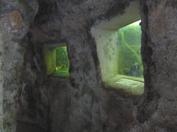 Parque Lage Rio de Janeiro Aquarium