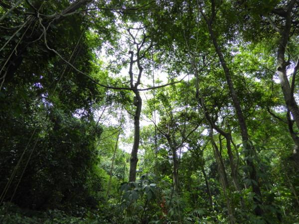 Parque da Catacumba Lagoa Grüner Park Rio de Janeiro