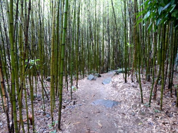 Parque Serra dos Orgaos Petropolis Brasilien Bambus