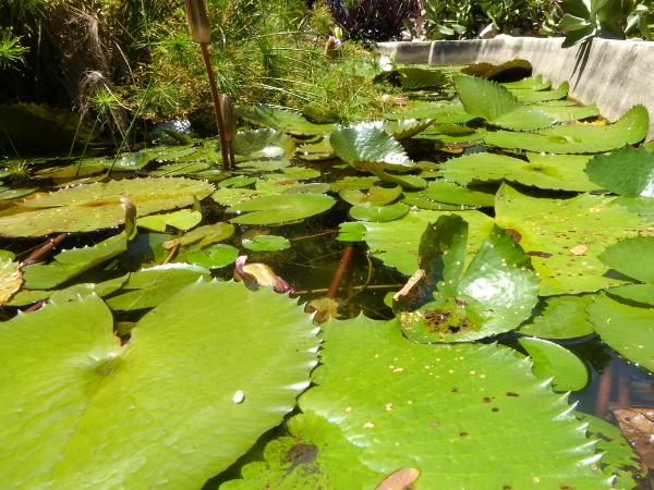 seerosen jardim botânico