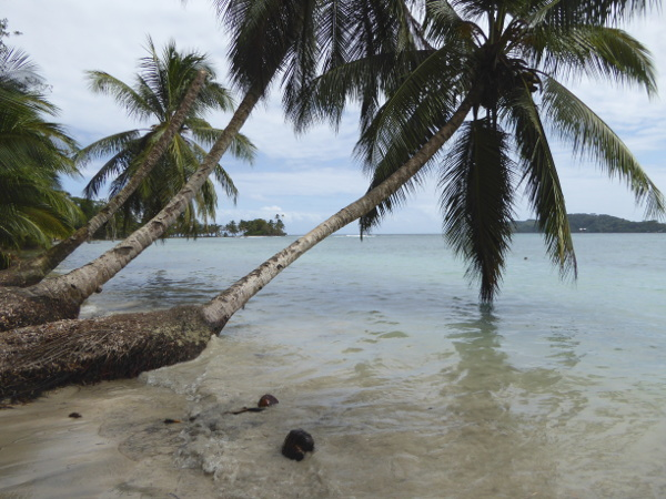 Isla Carenero Bocas del Toro palmen sand