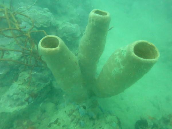 Tauchen auf bastimentos unterwasser