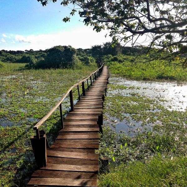 pantanal wetlands bruecke Mato Grosso
