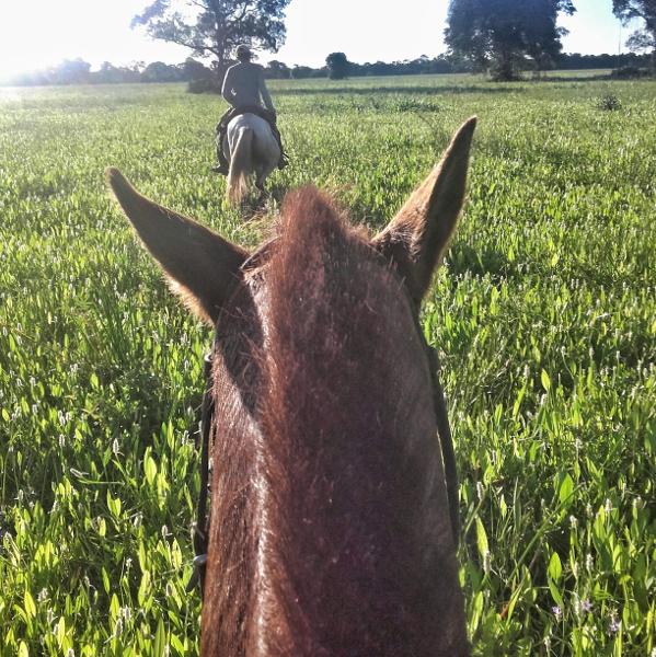 shakira Pantanal Mato Grosso Pferde