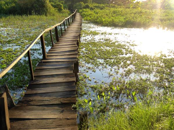 Pantanal steg im Abendlicht schoenstes Bild