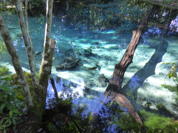 pantanal video blaue lagune mato grosso bom jardim