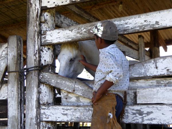 homer pferde pantanal