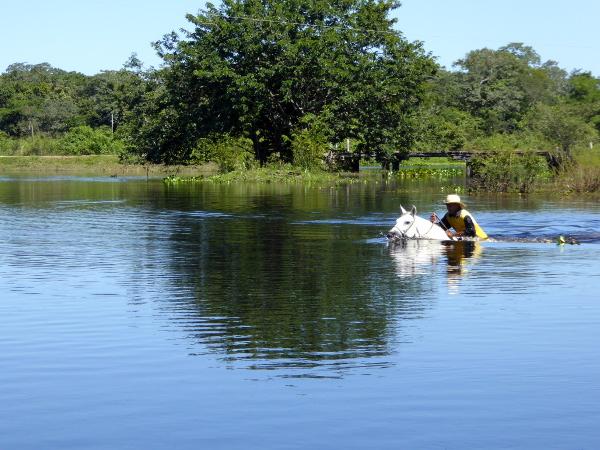 schwimmende Pferde pantanal