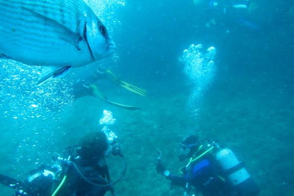 Islas Medas Tauchen costa brava l estartit freibeuter reisen fisch is watching
