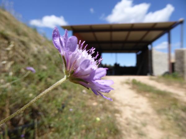 La Placeta Montsant Weine Freibeuter Reisen Blume