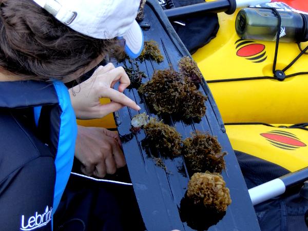 Llança Kajak Freibeuter Reisen verkostung algen