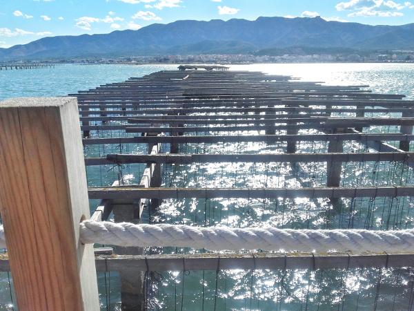 Musclarium Muscheln Ebrodelta Freibeuter reisen Muschelbank