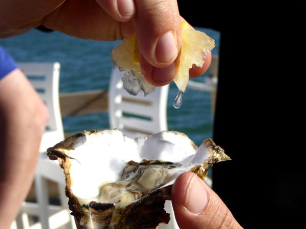 Musclarium Muscheln Ebrodelta Freibeuter reisen austern mit zitrone