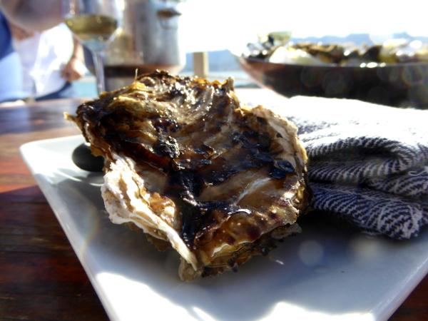 Musclarium Muscheln Ebrodelta Freibeuter reisen austern zuechten