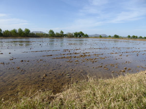 Pals Costa Brava Reisfelder wasser reis