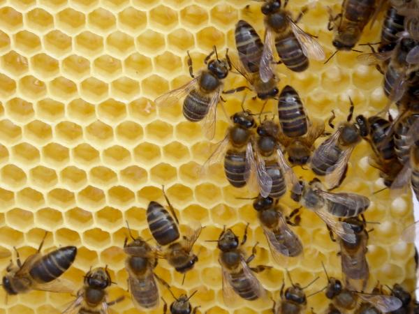 die bienen und der honig bee careful. Black Bedroom Furniture Sets. Home Design Ideas