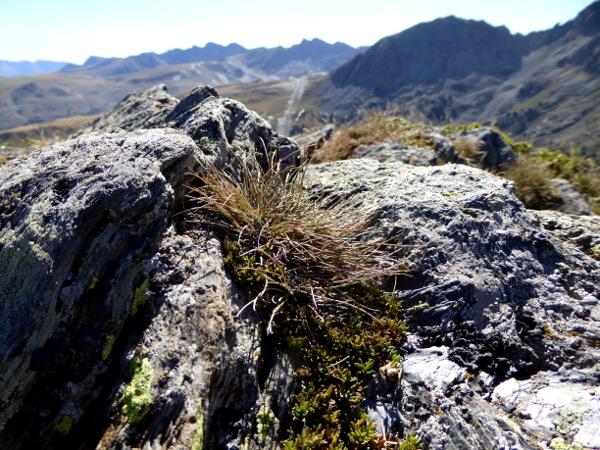 andorra-pflanzen-berge-freibeuter-reisen