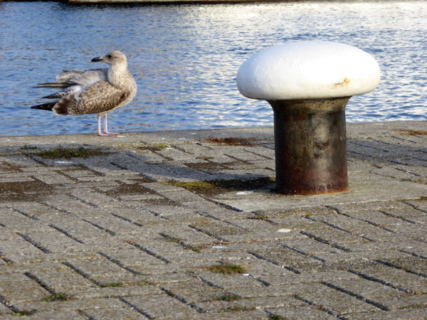 polder-moewe-freibeuter-reisen