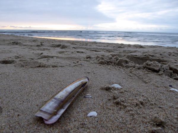strand-strandraeuber-texel-freibeuter-reisen