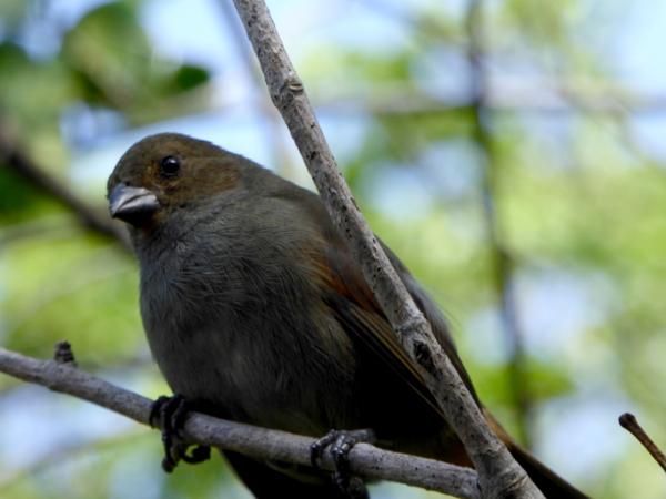tiere-vogel-naturpark-presquile-de-la-caravelle-martinique-freibeuter-reisen