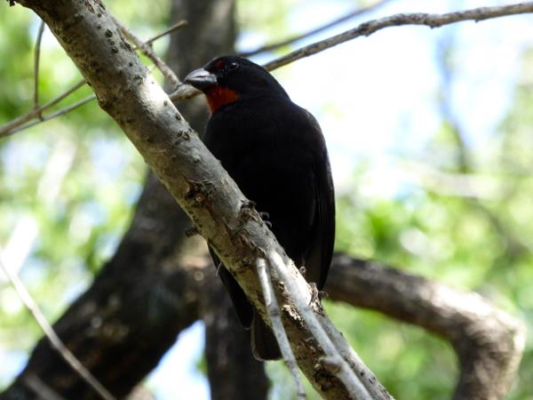 vogel-naturpark-presquile-de-la-caravelle-martinique-freibeuter-reisen