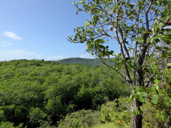 wald-wandern-naturpark Presqu'île de la Caravelle -martinique-freibeuter-reisen