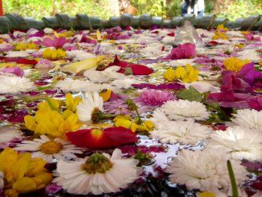 gaerten blumen brunnen anima garden marrakesch andre heller freibeuter reisen