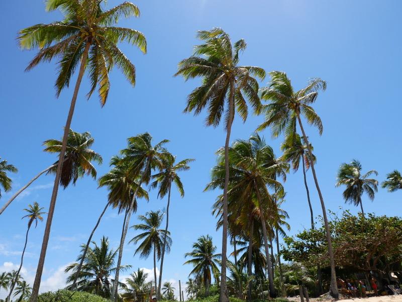 in Praia do forte F
