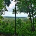 regenwald amazonas